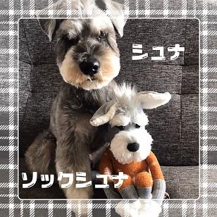 f:id:goukakuhonpo:20200226223607j:plain