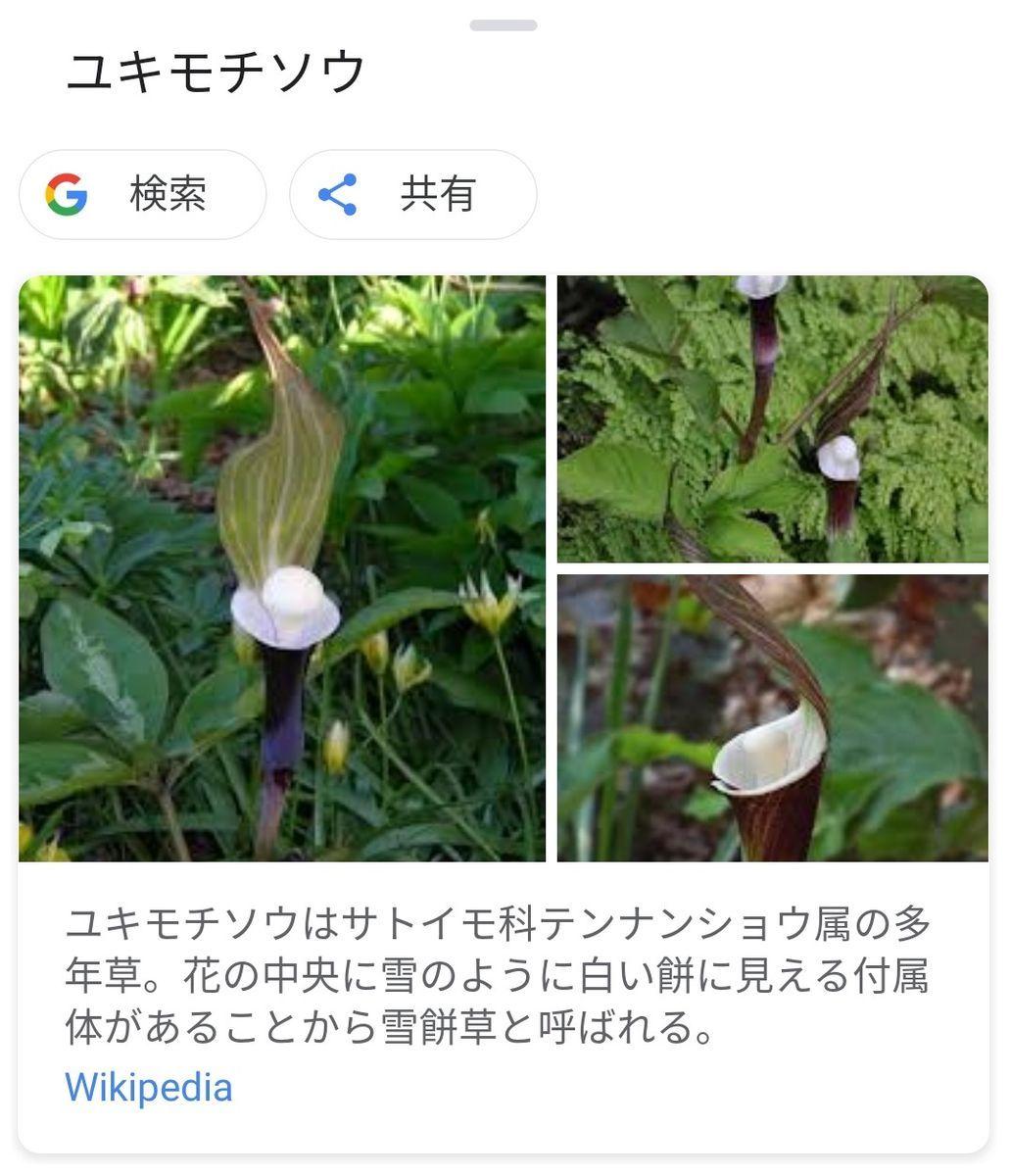 f:id:gouriki2020:20200505222909j:plain