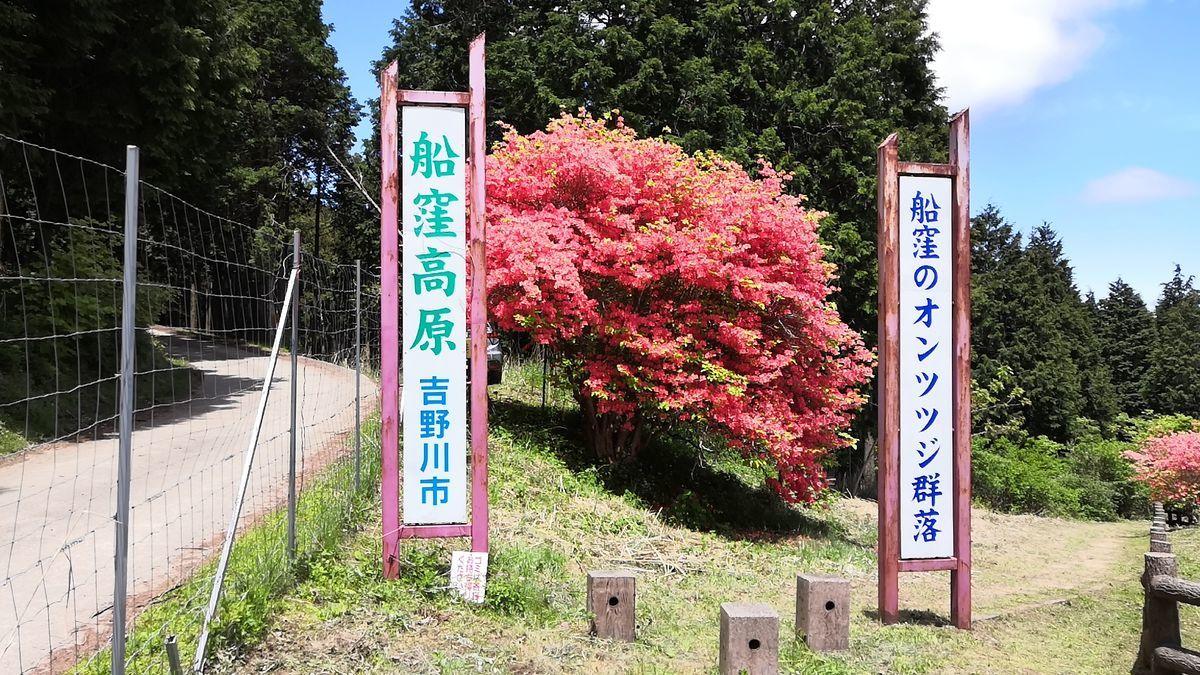 f:id:gouriki2020:20200521210533j:plain