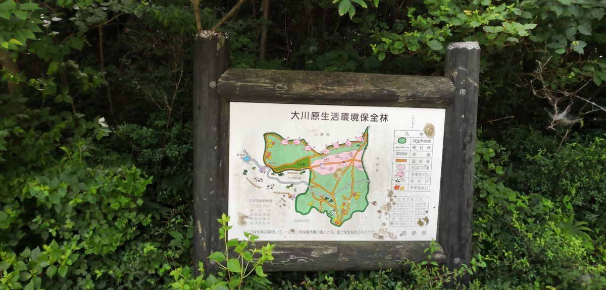 f:id:gouriki2020:20200719201102j:plain