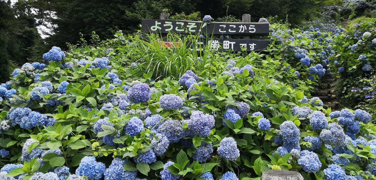 f:id:gouriki2020:20200719201155j:plain