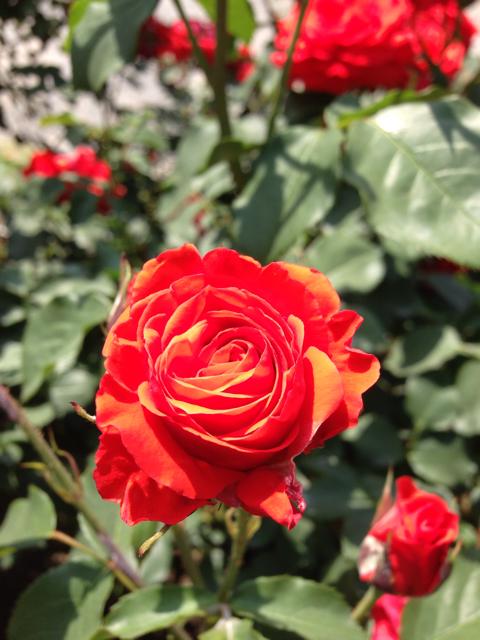 http://goutenkai.hatenablog.com/entry/2013/05/27/111301