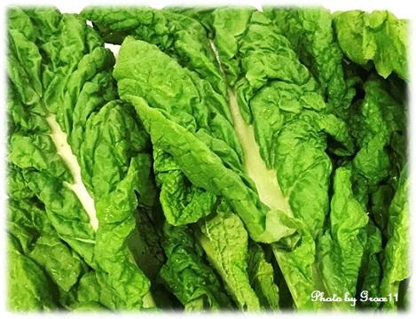 緑黄色野菜の王様と呼ばれているかつお菜
