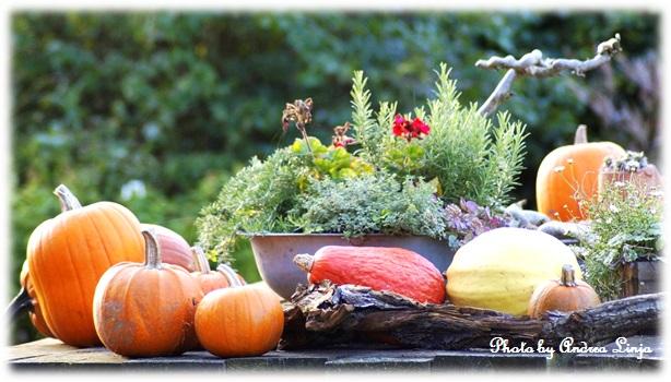 かぼちゃとハーブ 秋の景色