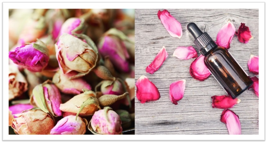Rose&Herb、バラ、ローズ、ハーブ