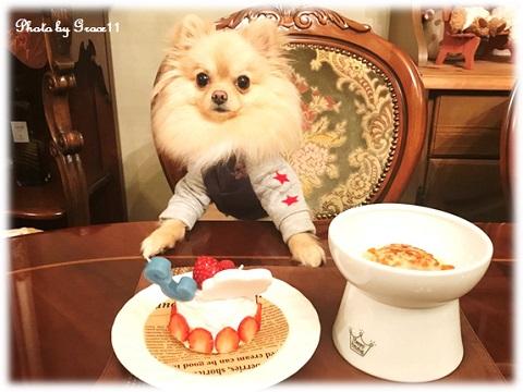 愛犬シフォンの3歳の誕生日☆手づくりハンバーグとバースデーケーキでお祝い♪