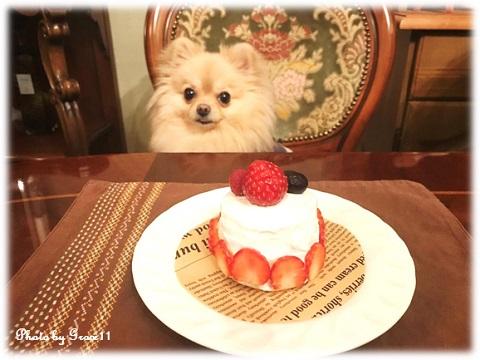 ケーキを前にほくそ笑む愛犬シフォン♪