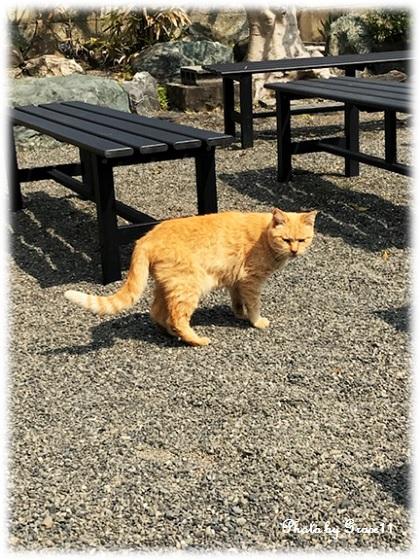 久能エリアのいちご農園で出迎えてくれた猫ちゃん