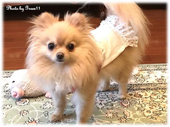 手縫いで手づくり 愛犬の服 子供服を犬の服にリメイク!