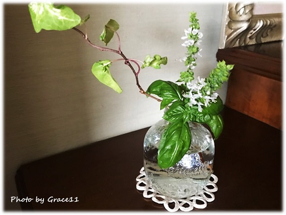 スイートバジルの小さな白い花を花瓶に挿して