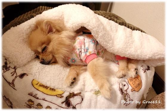 あったかベッドで眠るポメラニアン犬