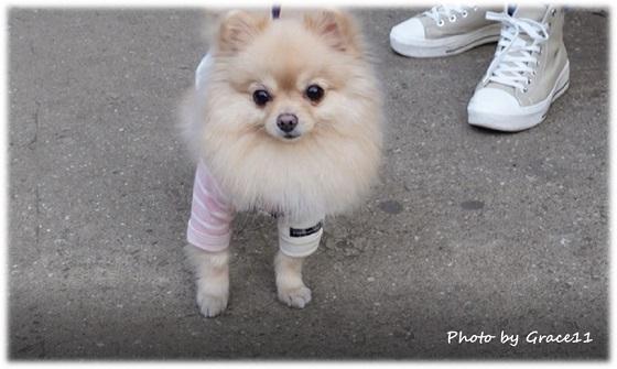 井の頭公園 愛犬と散歩