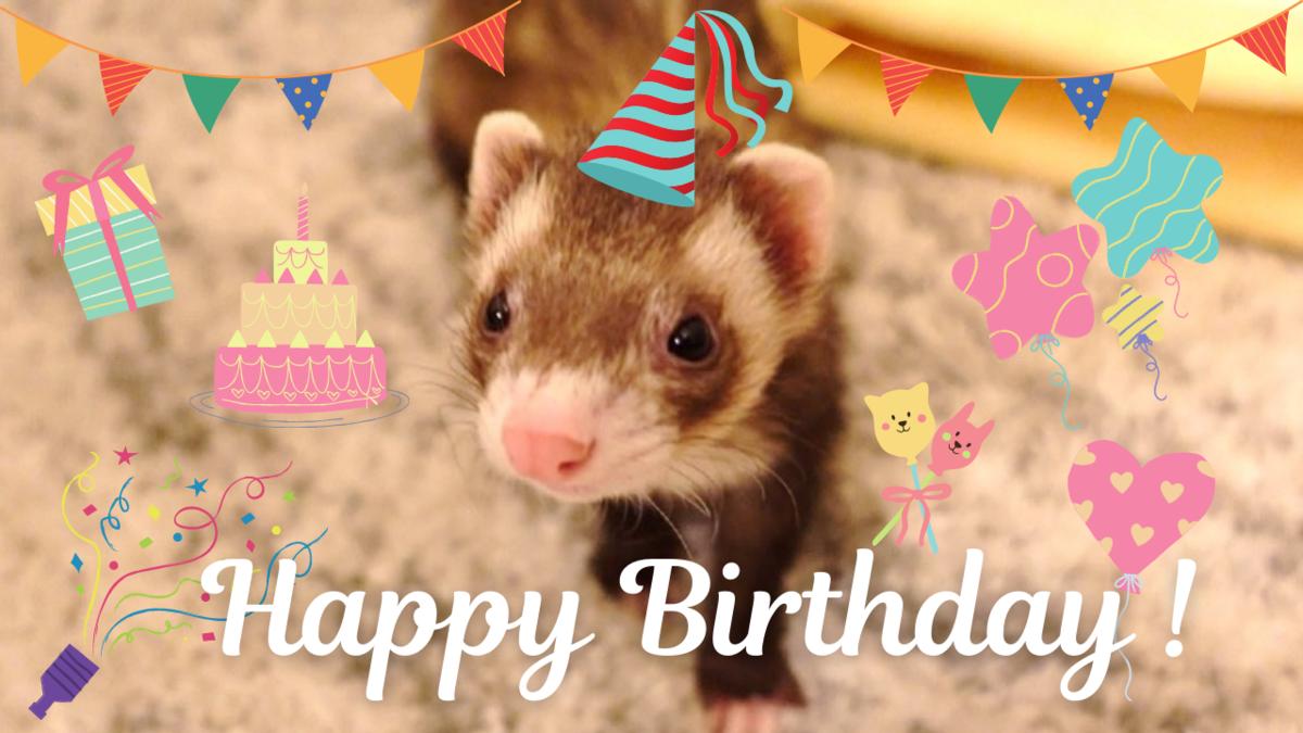 フェレット1歳の誕生日
