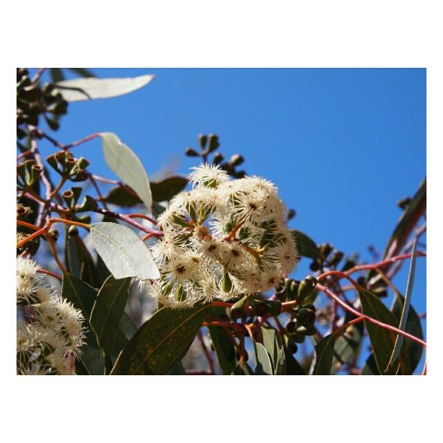 f:id:grantflower:20201015155238j:image