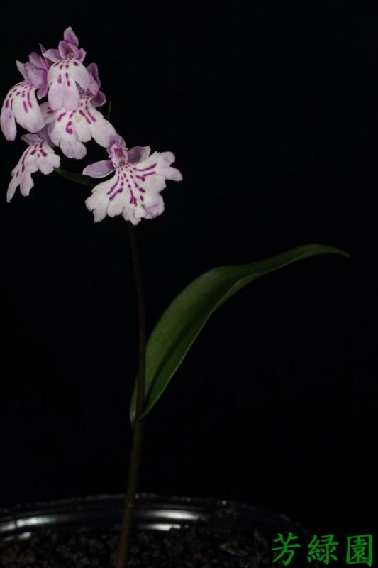 f:id:green-orchid:20160511220541j:image