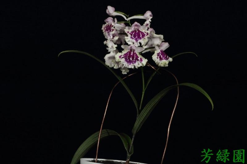 f:id:green-orchid:20160530164611j:image