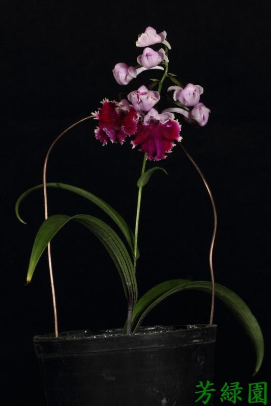 f:id:green-orchid:20160530164727j:image