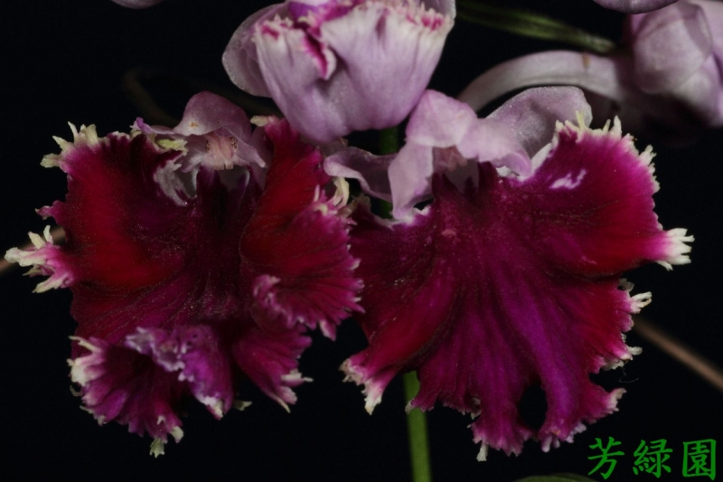 f:id:green-orchid:20160530164828j:image