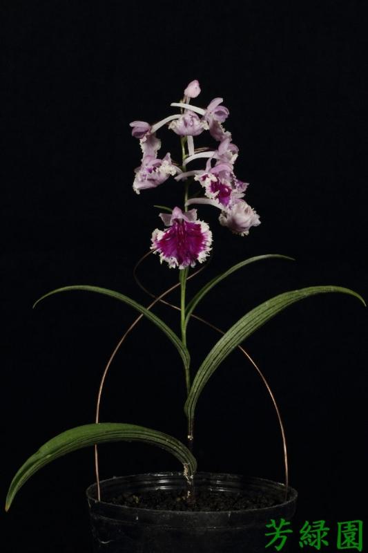 f:id:green-orchid:20160530165009j:image