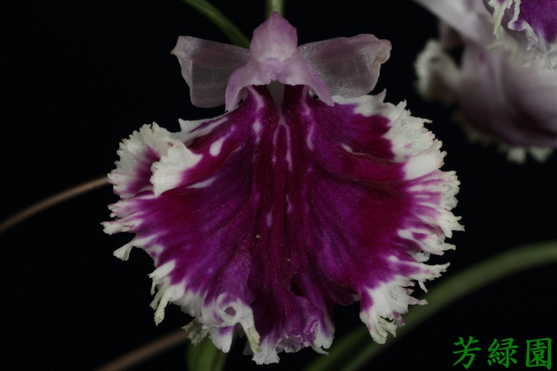 f:id:green-orchid:20160530165043j:image