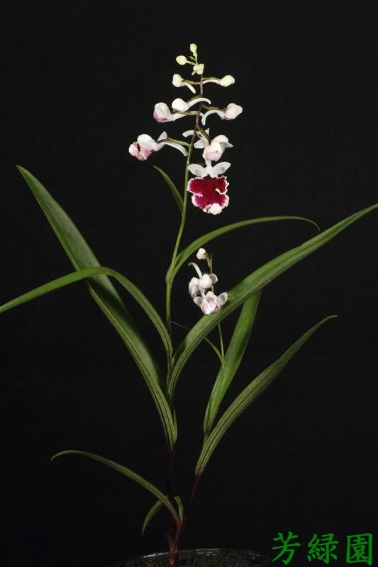 f:id:green-orchid:20160611134549j:image