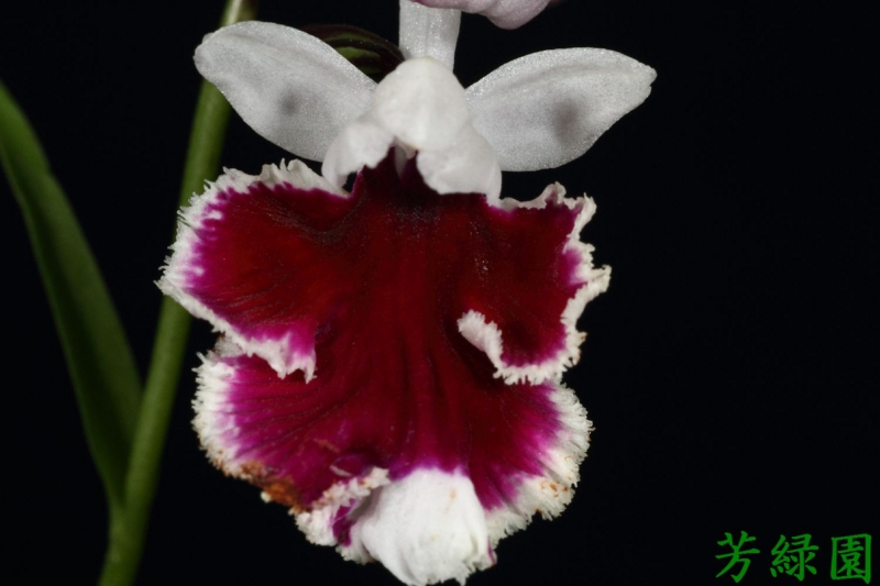 f:id:green-orchid:20160611134559j:image