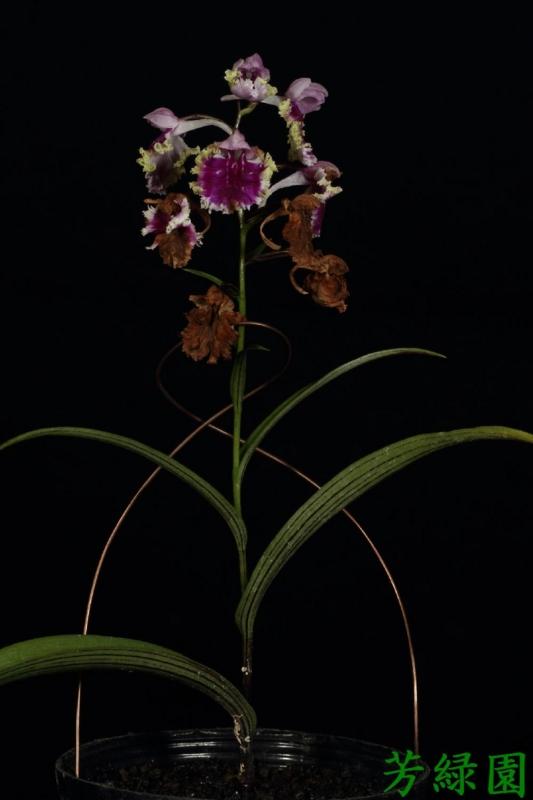f:id:green-orchid:20160611164538j:image