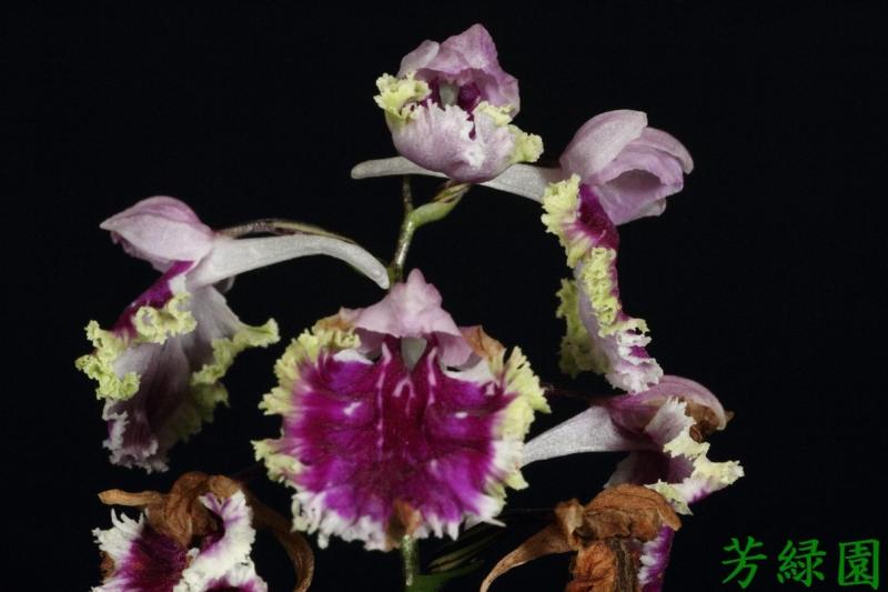 f:id:green-orchid:20160611164601j:image