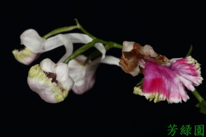 f:id:green-orchid:20160612175755j:image