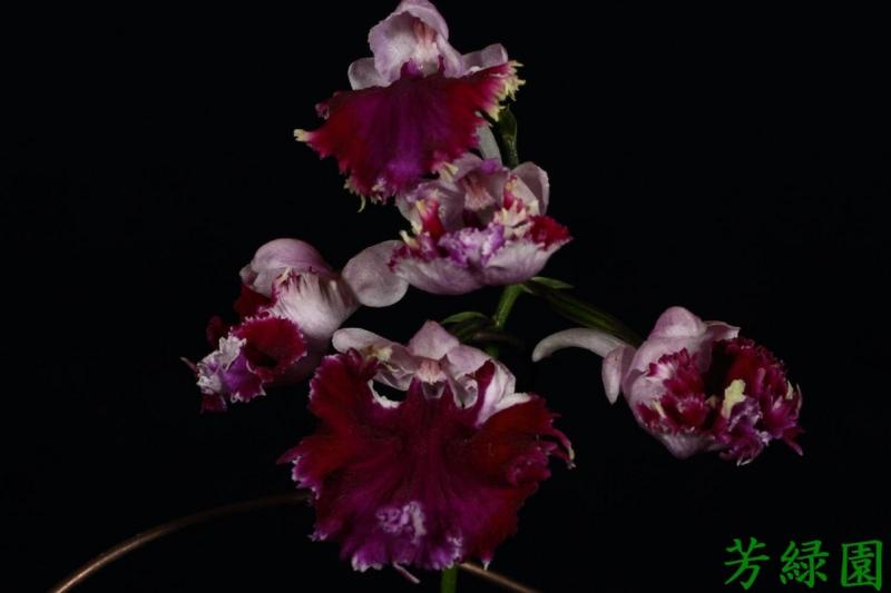 f:id:green-orchid:20160612180634j:image