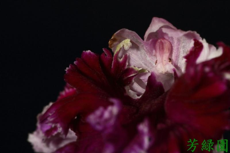 f:id:green-orchid:20160612180722j:image
