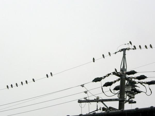 f:id:greenbaaba:20111118012927j:image