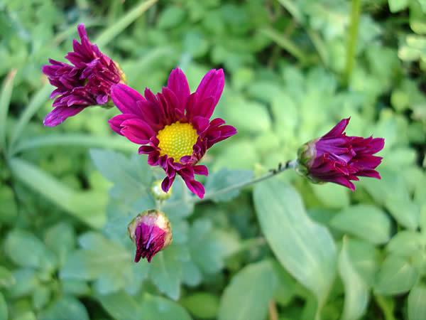 f:id:greenbaaba:20111118012939j:image:h152