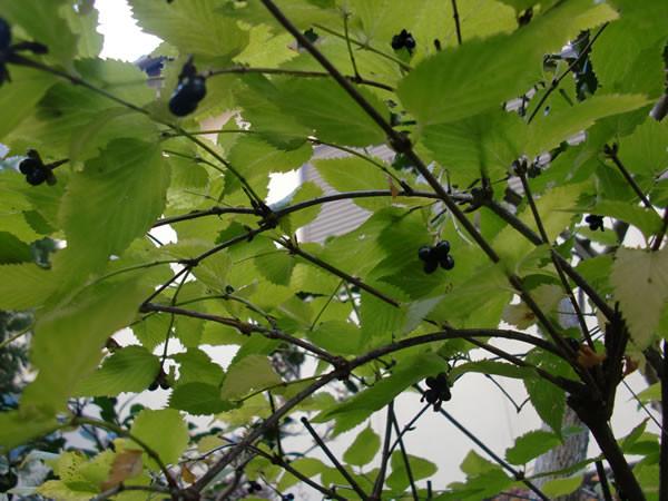 f:id:greenbaaba:20111212200027j:image:h152
