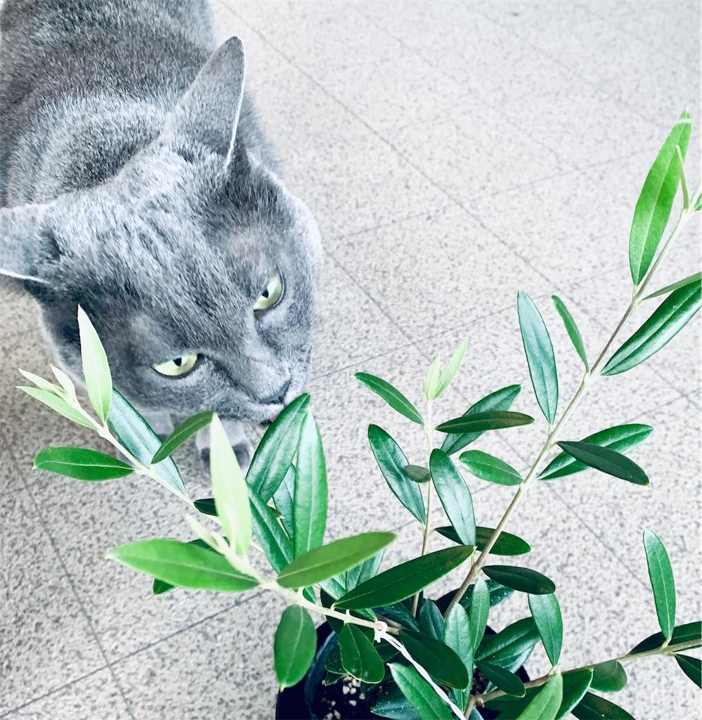 f:id:greencats:20210728222718j:image