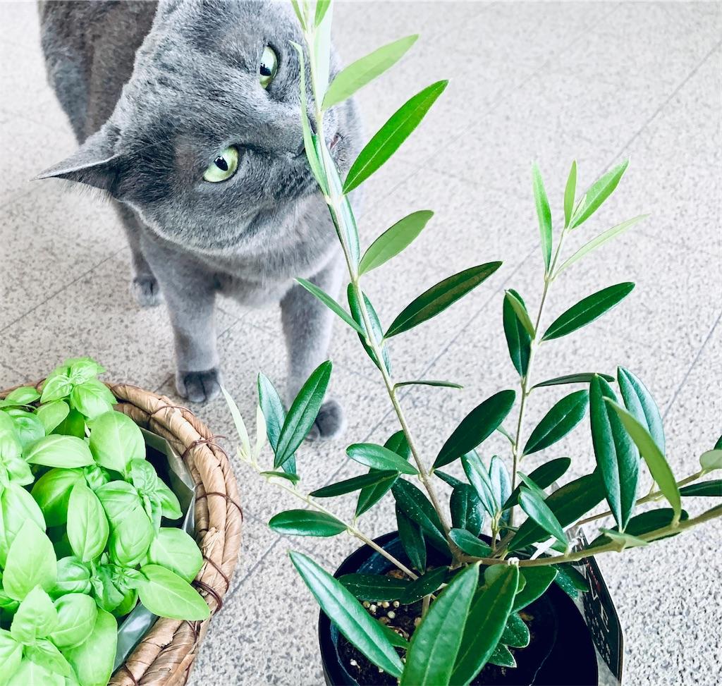 f:id:greencats:20210728222723j:image