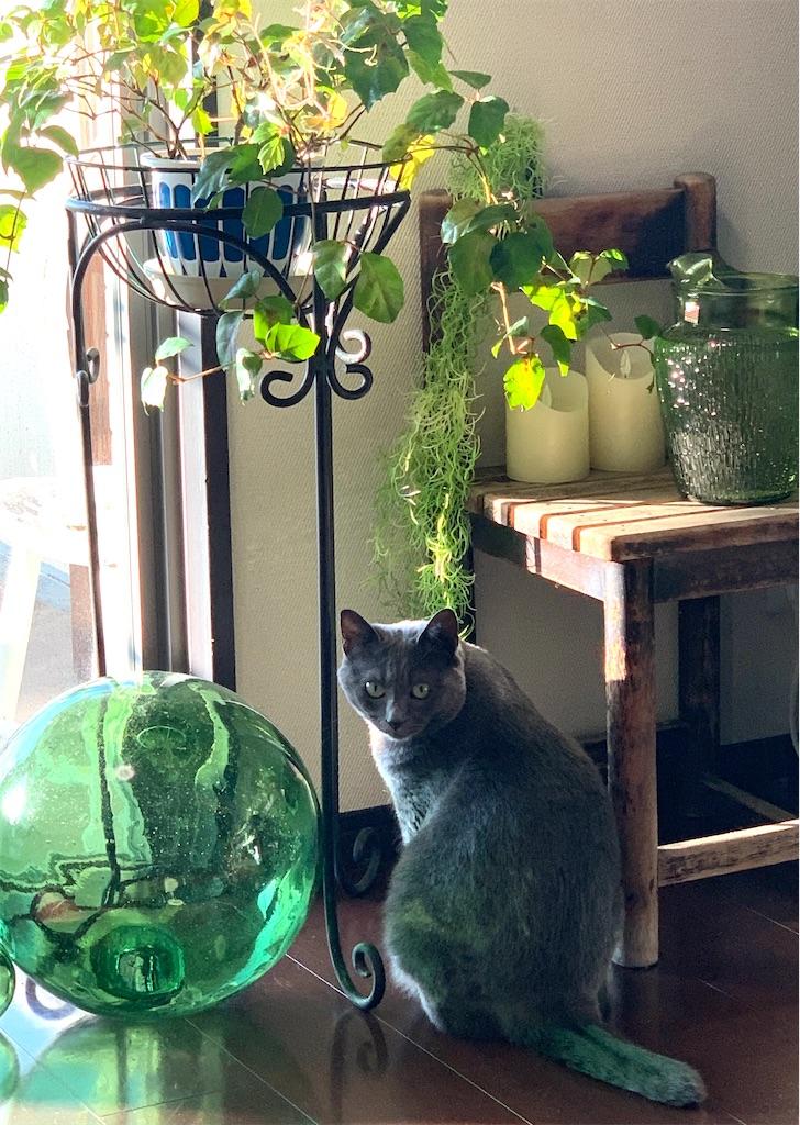 f:id:greencats:20210728225003j:image