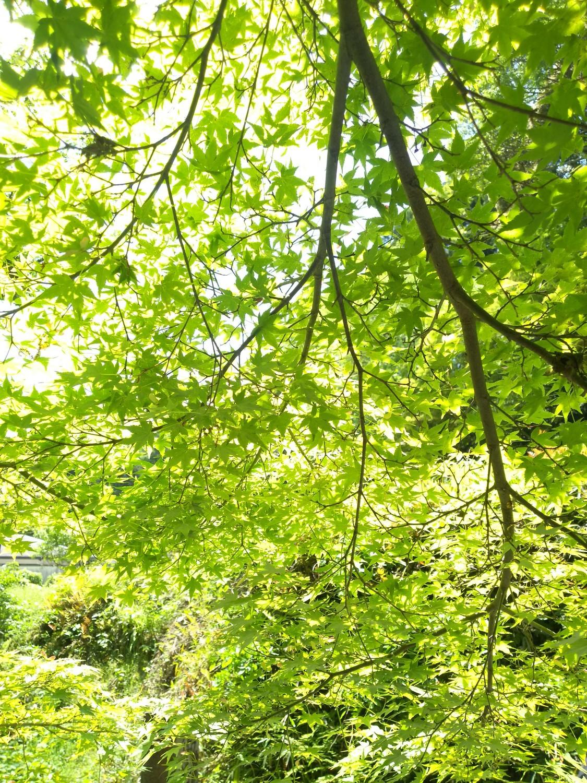 f:id:greengreengrass:20210507110024j:plain