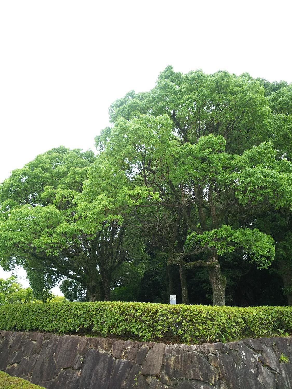 f:id:greengreengrass:20210706145422j:plain