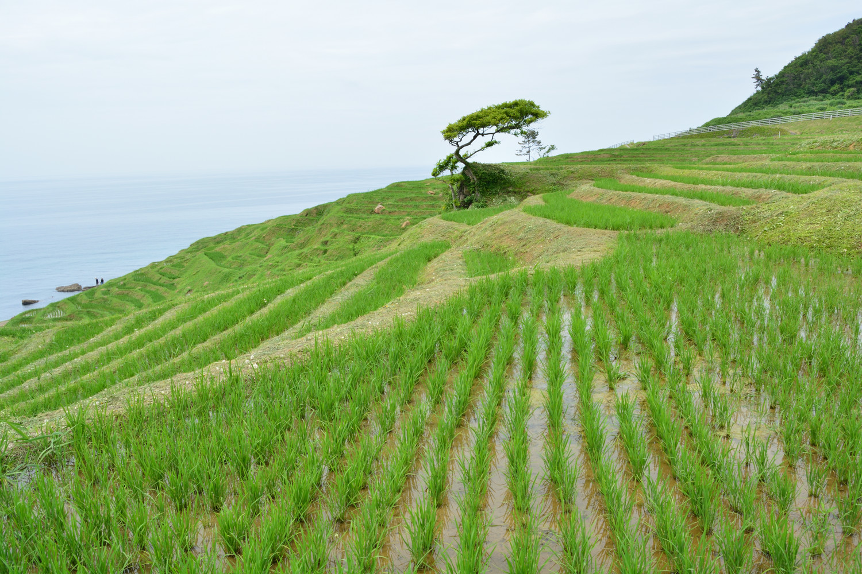 f:id:greengreengrass:20210720151909j:plain