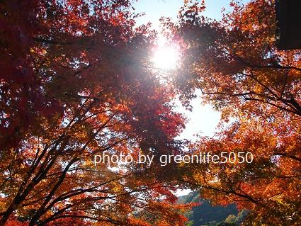 f:id:greenlife5050:20131119105155j:plain