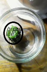 f:id:greenlife5050:20160710150128p:plain