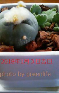 f:id:greenlife5050:20180103145140p:plain