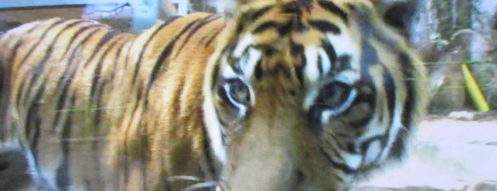 東山動植物園 80周年