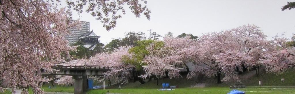 岡崎城の桜祭り