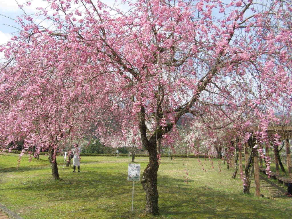 道の駅うすずみ桜の里・ねお