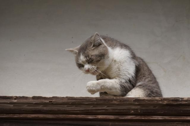 猫くしゃみ