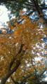 少しずつ木々が色づいてきました(^_-)