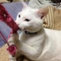 白;毛糸好き