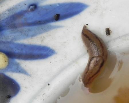 f:id:gryphon:20120819194545j:image:w640
